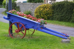 Donkey Cart with Flowers